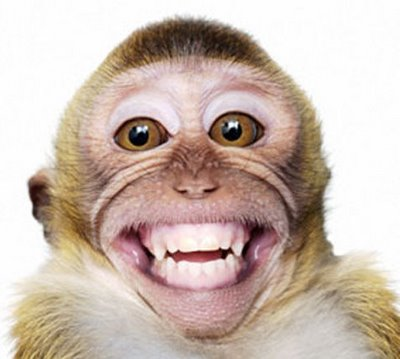 cute-baby-monkey-pictures-smiling-monkey-picture