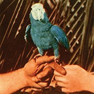 andrew bird2