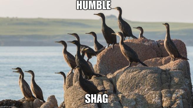 humble shag